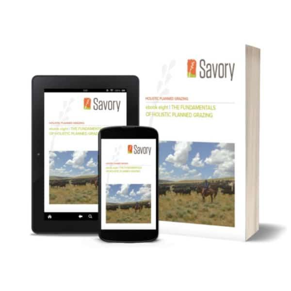 Holistic Financial Planning ebook